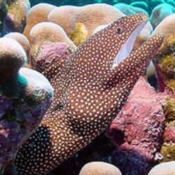 Whitemouth Moray- Saipan by Martin Dalsaso 
